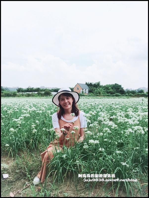大溪韭菜花15.JPG