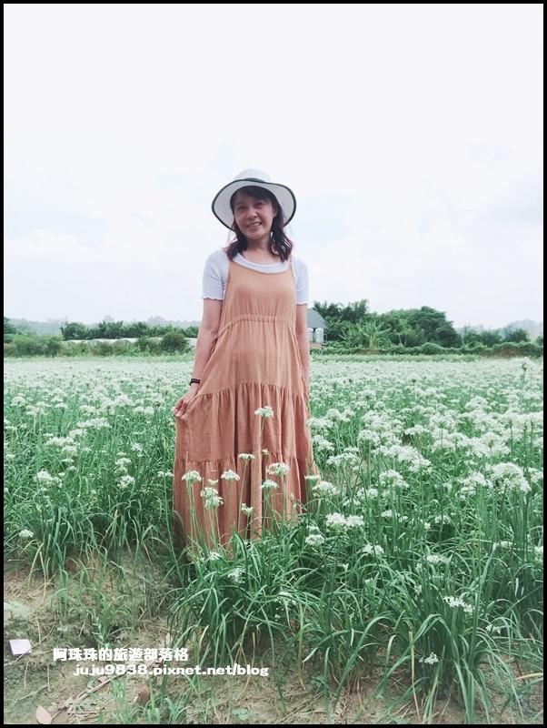 大溪韭菜花14.JPG