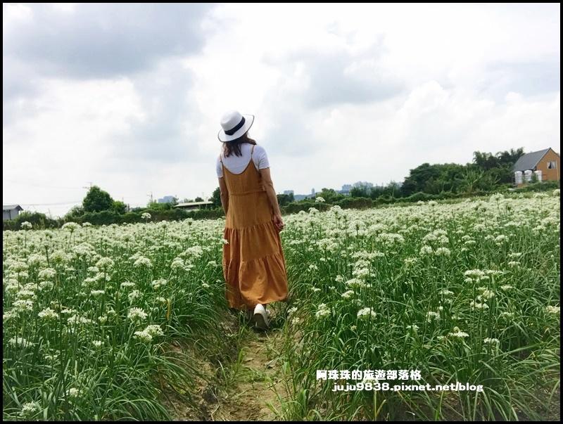 大溪韭菜花20.JPG