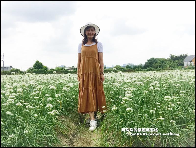 大溪韭菜花21.JPG