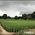 桃園地景藝術節64.JPG