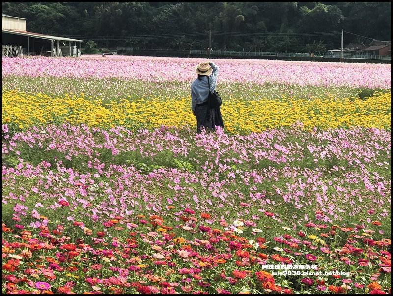大溪花彩節21.JPG