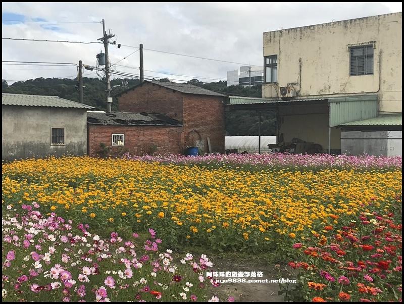大溪花彩節27.JPG