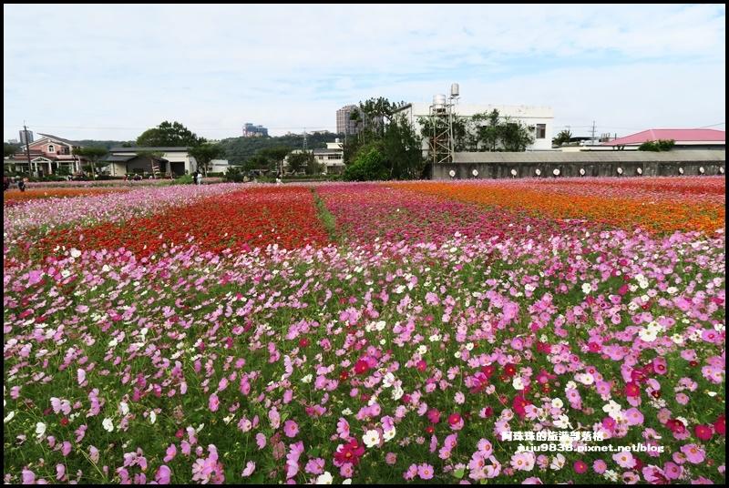 大溪花彩節38.JPG