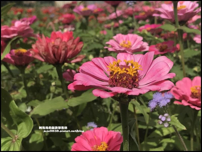 大溪花彩節62.JPG