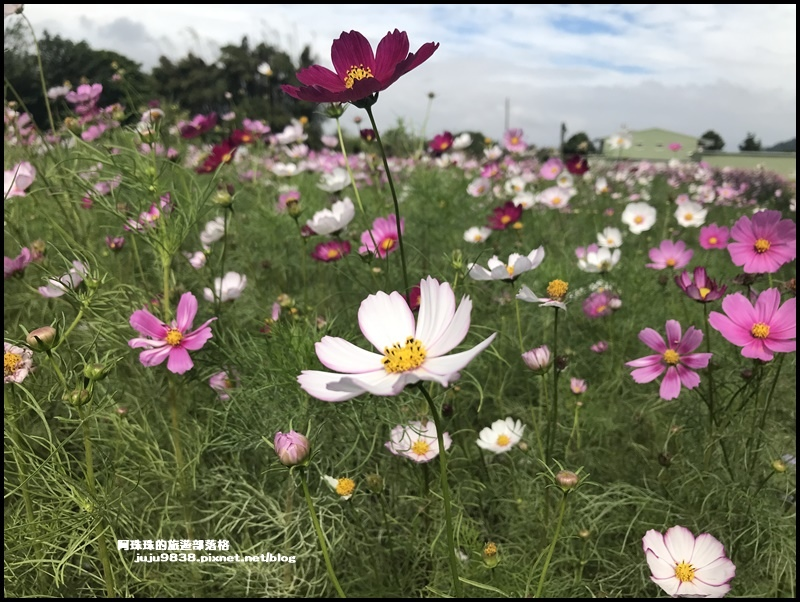 大溪花彩節72.JPG