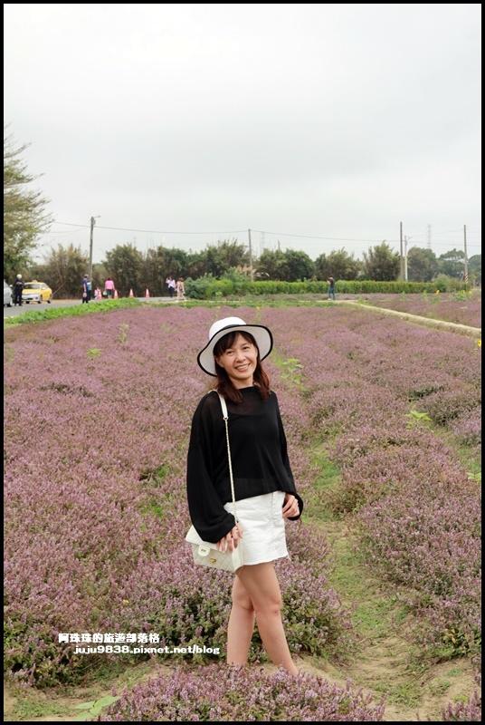 禾山田仙草花20.JPG