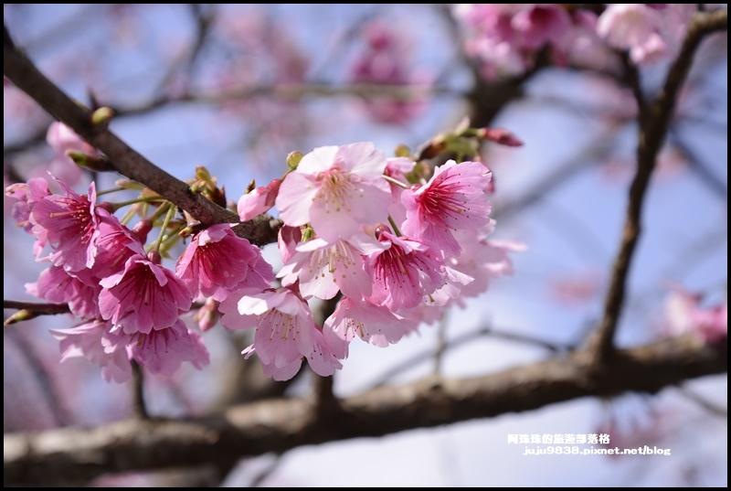 大熊櫻花園1.JPG
