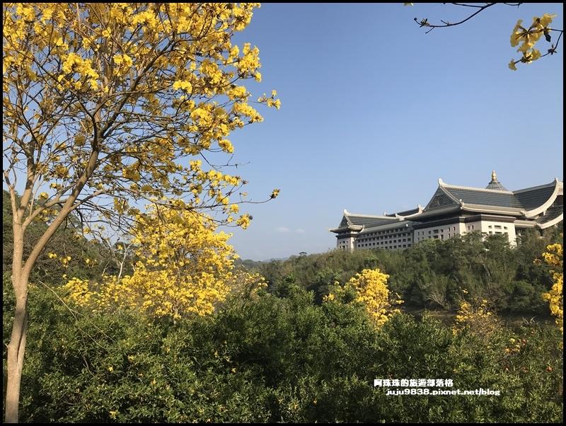 金湖灣風鈴木5.JPG