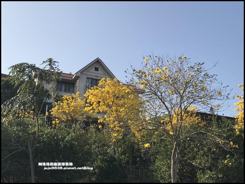 金湖灣風鈴木11.JPG