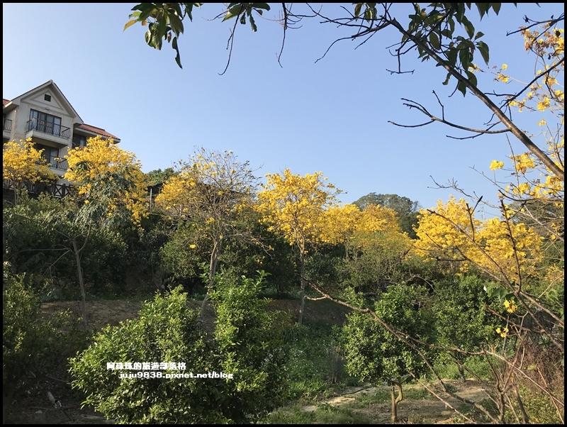 金湖灣風鈴木14.JPG