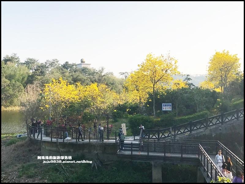 金湖灣風鈴木23.JPG