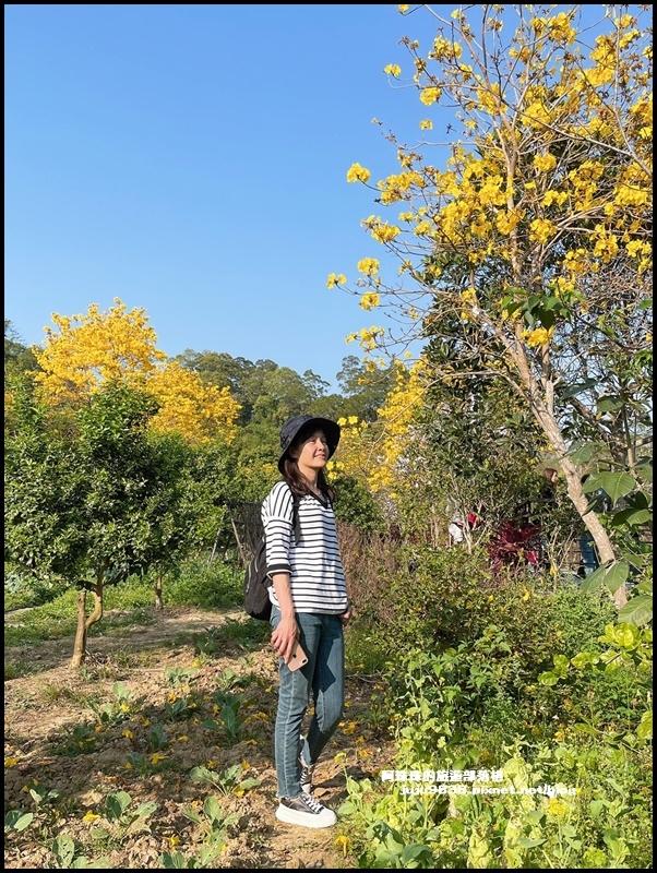 金湖灣風鈴木35.JPG