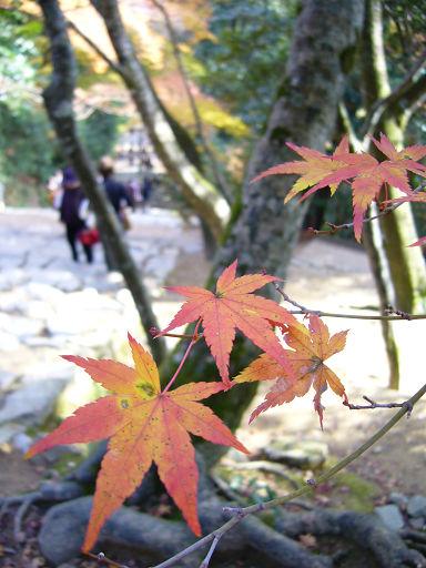紅葉後依然是石階