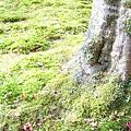 神護寺內一景(植物)