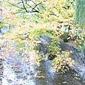 秋季風情十分迷人