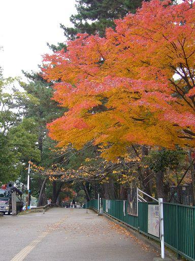 奈良的街道十分乾淨,也十分寧靜