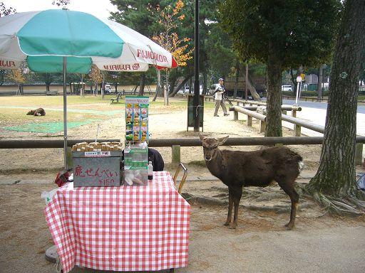 不見攤販的鹿仙貝攤位......但自愛的斑比還是不敢越雷池一步^O^
