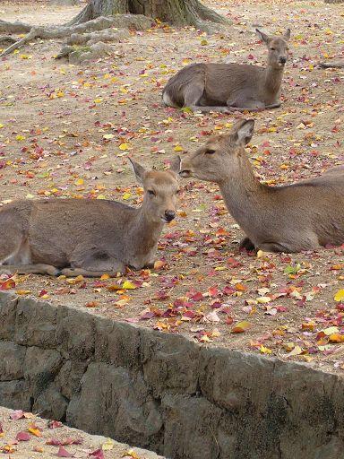 閒適的鹿群