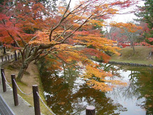 奈良的秋景十分美麗