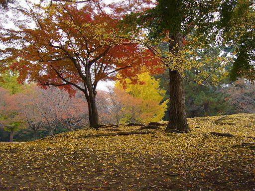 秋天是很棒的季節,有楓和銀杏的買一送一^O^