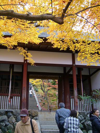 坡道兩側的楓樹十分茂盛,層層疊疊、漸高漸深的隨著地勢遍植,像是紅葉構成的美麗隧道