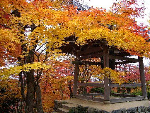 寺內的楓紅盛況相當壯麗,是我們這幾天看下來的第一名