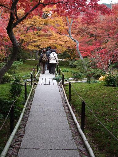 石徑、庭園、苔景,加上漫天的紅葉掩映