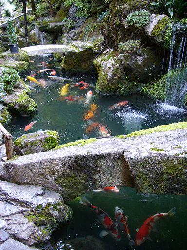 色彩繽紛的錦鯉遊魚是洛匠的另一項名物