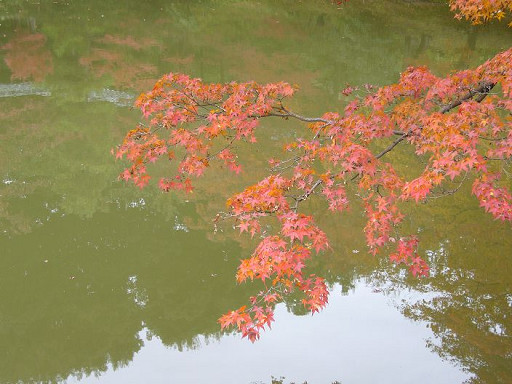 美麗的楓紅,美麗的倒影