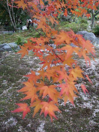 楓和日式庭院很搭*O*