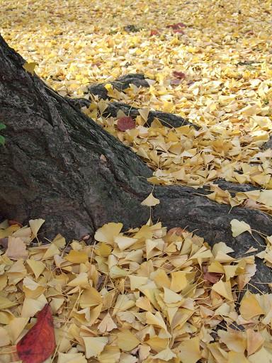 屬於京都的迷人秋色