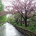 撐著傘,漫步在濕漉漉的石坂路上,這讓人懷念的白川畔啊......*O*