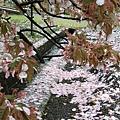 落了滿地的花瓣。