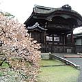 櫻花和建築一起,超合「拍」。