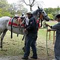 向可愛的馬兒們説聲掰掰,我回頭再看一眼,也在心裡面和我極喜愛的上賀茂神社,依依的告別。