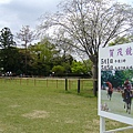 每年五月舉辦的賀茂競馬很熱鬧喔!