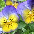 這種花我常見到,但卻很慚愧的不知其名......*(++)*