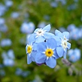 惹人憐愛的小藍。