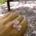 一朵粉色的櫻花,無意間飄落在小玉的身上。