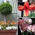 不管是店面或住家,常可以見到這樣被照顧得漂漂亮亮的盆栽。