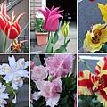 尖型和鋸齒狀的花瓣好特別。