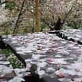 叢叢櫻花樹下,放了些木製的小几及座席供遊人歇息。