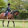 今天的天氣不冷也不熱,非常適合跑馬。