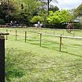大片的草地,用竹竿隔出賽馬的跑道。