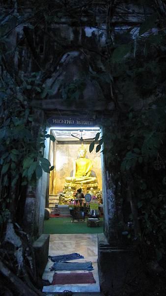 安帕瓦樹中廟
