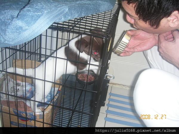 籠子裡的狗食未吃完一直看著爸霸手裡的西莎.JPG