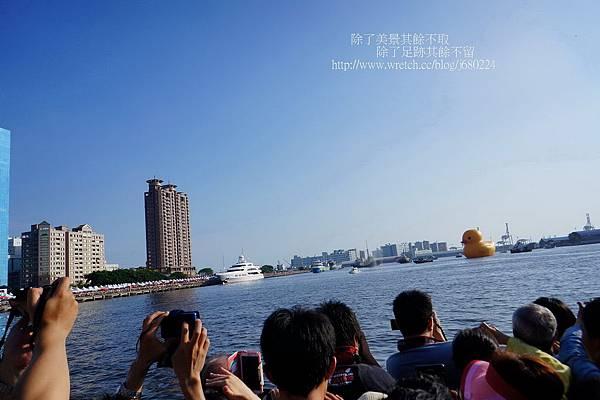 黃色小鴨 (9)