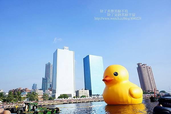 黃色小鴨 (12)