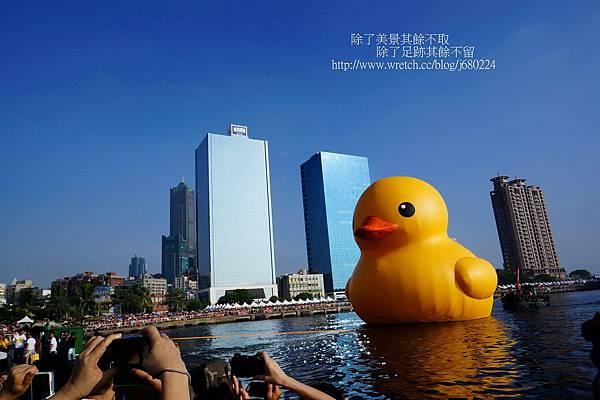 黃色小鴨 (13)